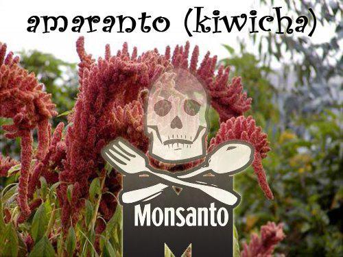 Monsanto-3